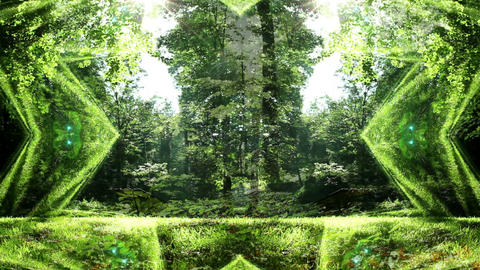 Fantasy Forest Animation