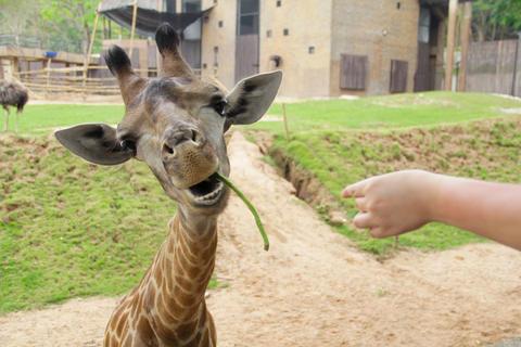 Cheerful giraffe Photo