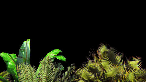 Tropical plant in the wind.With alpha channel. Codec-PNG Alpha. Beautiful summer Animation