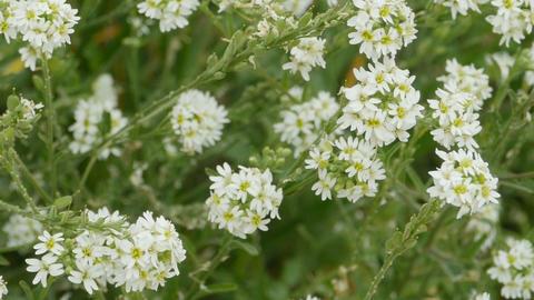 wild flowers carpet Stock Video Footage