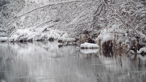 River Coast Covered with Snow Snow Over River in Winter Forest. Winter Live Action