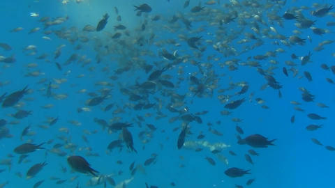 school of fish swims in the sea Footage