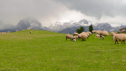 Panorama of the pastures in the Montenegro, sheep graze Footage