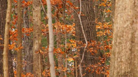 autumn trees Footage