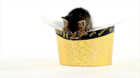 kitten in a happy new year hat Footage