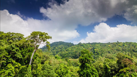 Tropical forest with clouds running to camera time lapse Footage