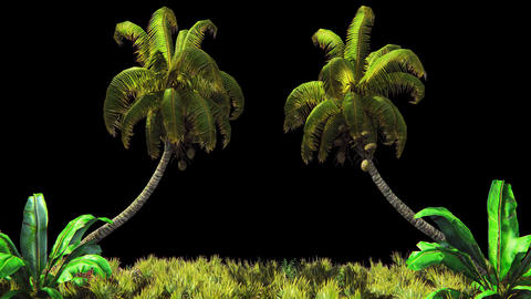 The branches of palm tree and Tropical plant in the wind.With alpha channel Animation