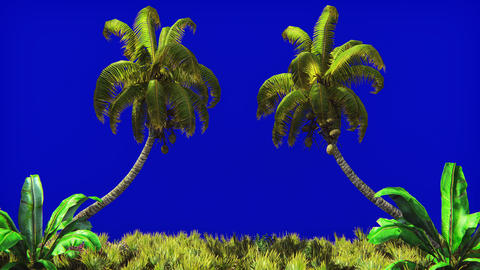 The branches of palm tree and Tropical plant in the wind on blue screen Animation