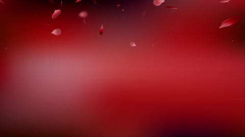 Petal rose red background red Stock Video Footage