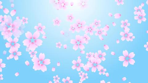 Cherry blossom background sky Animation