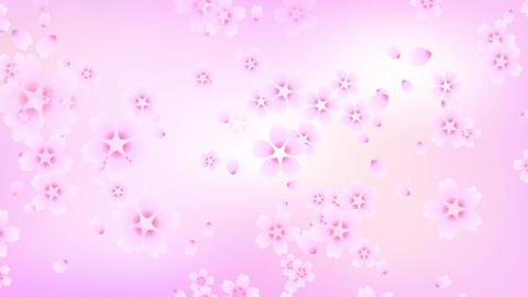 Cherry blossom background pink Animation