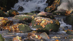 Autumnal leaves in a flowing brook Footage
