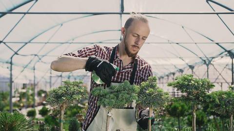 Attractive men gardener in green apron watering plants and flowers with garden Footage