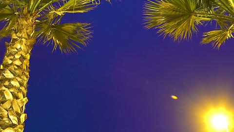 Palm trees in night exotic city, tropical vacation, resort tourism in summer Footage