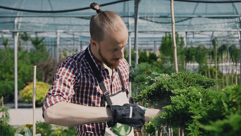 A gardener with a special garden tool sprayed coniferous plants in a large Footage