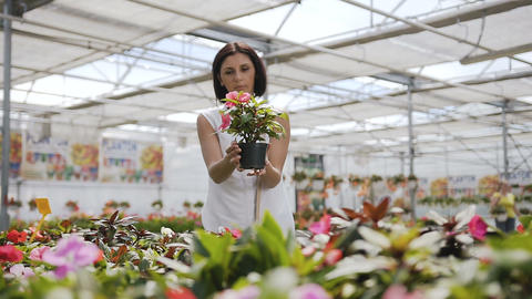 Woman Buying Flowers in a Garden Shop. Young woman shopping for decorative Footage