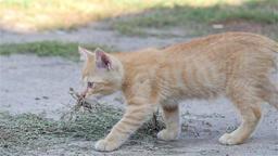 Little ginger kitten walk in slow motion Live Action