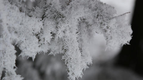 the branch of the tree is covered with snow on all sides 영상물