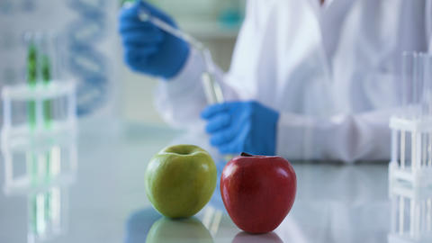 Green and red apple table, scientist checking food quality, nutritional studies Live Action