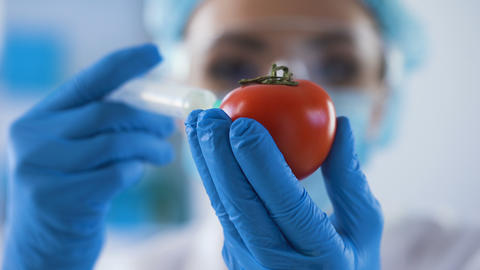 Biology scientist injecting chemical liquid by syringe in tomato, pesticides Live Action