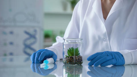 Biology researcher injecting hormonal liquid in test plant, herbal cosmetics Live Action