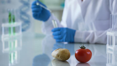 Fresh tomato and potato on laboratory table, worker inspecting nutrition quality Live Action