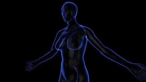 Female Body Animation