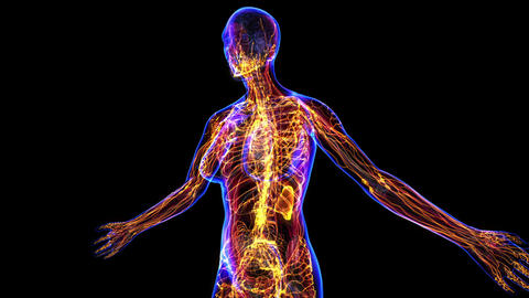 Female Lymphatic System Stock Video Footage