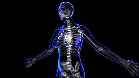 Female Skeleton stock footage