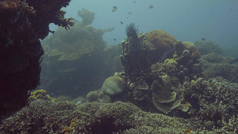 Fish swimming among coral reef in sea underwater view. Underwater world Footage