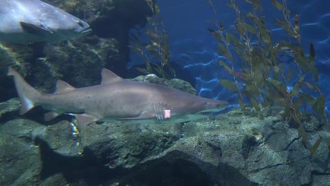 Shark floating along big stones, the dangerous predator of ocean GIF