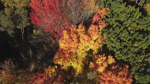 Autumn trees in the park - aerial view Footage
