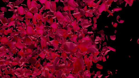 Petals in Valentine Heart Form leaves & Flying from Right... Stock Video Footage