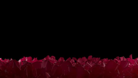 Red Rose Petals Slow Falling Flower Bed Close up Depth of... Stock Video Footage