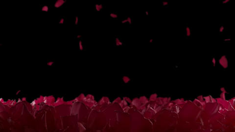 Red Rose Petals Slow Falling Flower Bed Close up Depth of Field Alpha Background Animation