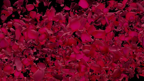 Red Rose Petals Flying by Right to Left with Alpha Transparency Matte Transition 애니메이션