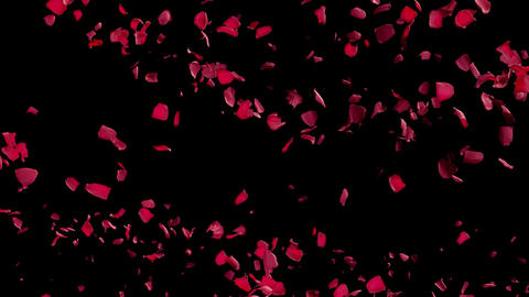 Rose Petals Swirl Flying by from Left in Air with Alpha Transparency Matte Animation