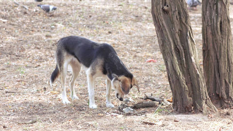 Stray dog eat under a tree Footage
