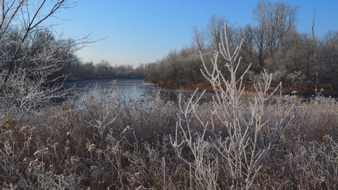 Lake, winter forest and dry grass in the frost. Early winter begins Footage