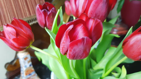 Red tulips 4 Footage