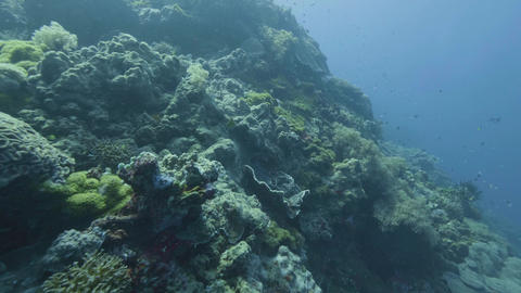 Point of view coral reef and swimming fish while sea diving. Scuba diving in sea Footage