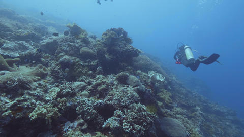 Scuba divers swimming underwater blue sea among coral reef and fish. Sea diving Footage