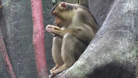 Monkey sitting on a tree branch GIF