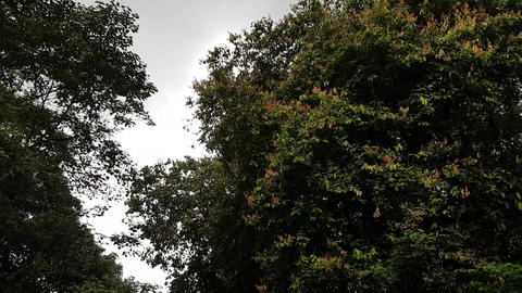 Windy Moving Foliage in Trees GIF