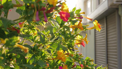 Blooming shrub in the light of bright sun Live Action