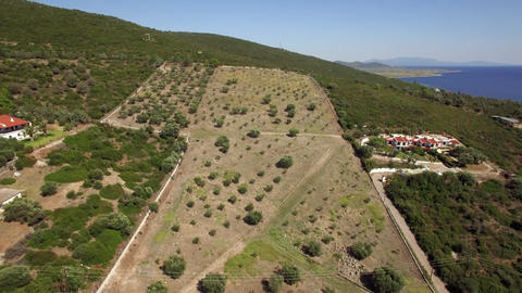 Flying over olive green garden and green hills, Greece Live Action