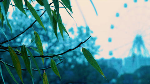 Leaves in a blured background Footage