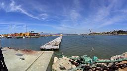 Feeding Seagulls by the port Footage