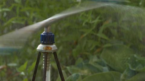 4K Ungraded: Sprinkler in Garden Footage