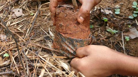 Tree planting Footage